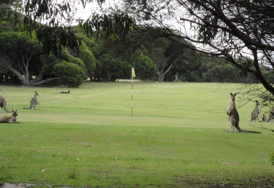Mallacoota Golf and Country Club