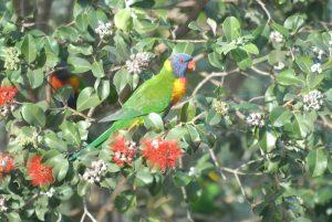 Mallacoota The Hub of Australia's Coastal Wilderness
