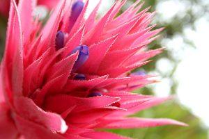 Waverley house lakes entrance accomodation - flora