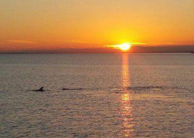 Dolphins Lake King, sunset Metung