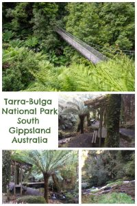 Tarra-Bulga National Park South Gippsland Australia