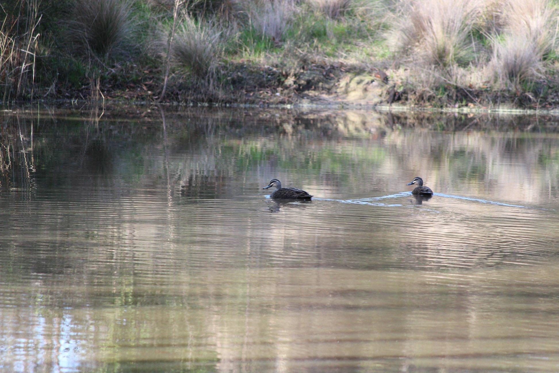 Crinigan Bushland Reserve - 1