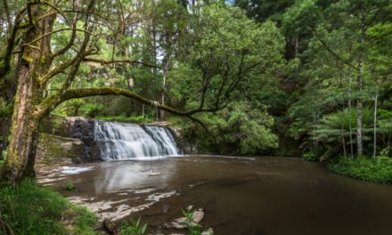 Top 5 Things to Do in Morwell, Latrobe Valley